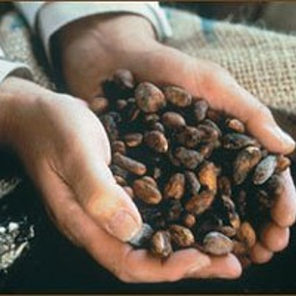 Fermented and dried cacao beans, as delivered to factories.