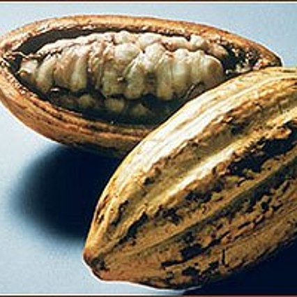 Cacao fruit with the still whitish cacao beans.